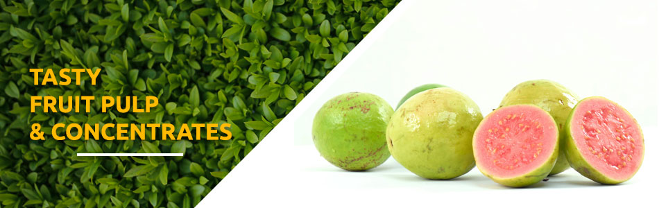 guava pulp exporters in india